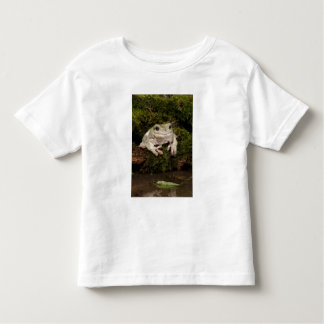 Central PA, USA, White's Treefrog; Litoria Toddler T-shirt