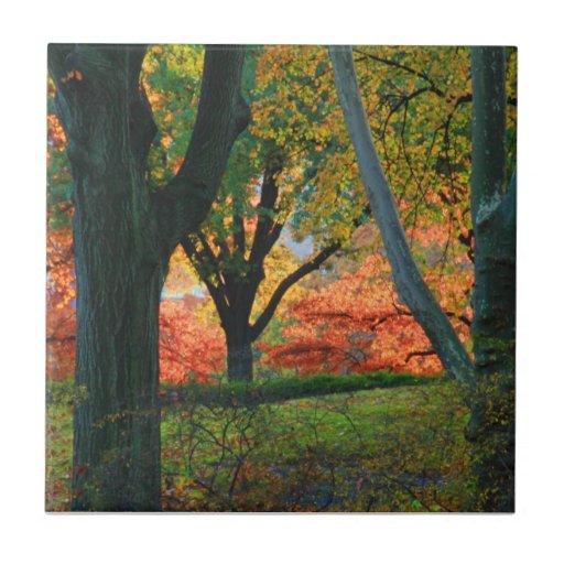 Central Park: Árboles que llevan su otoño los 02 Azulejo Cuadrado Pequeño