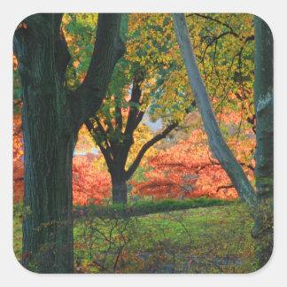 Central Park: Árboles que llevan su otoño los 02 Pegatina Cuadrada