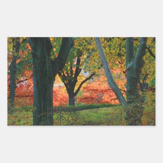 Central Park: Árboles que llevan su otoño los 02 Pegatina Rectangular
