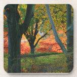 Central Park: Árboles que llevan su otoño los 02 Posavasos