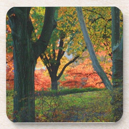Central Park: Árboles que llevan su otoño los 02 Posavasos De Bebidas