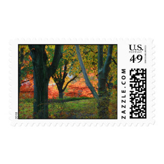 Central Park: Árboles que llevan su otoño los 02 Franqueo
