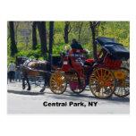 Central Park, caballo y carro Tarjetas Postales