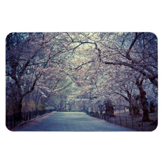 Central Park Cherry Blossom Path Magnet
