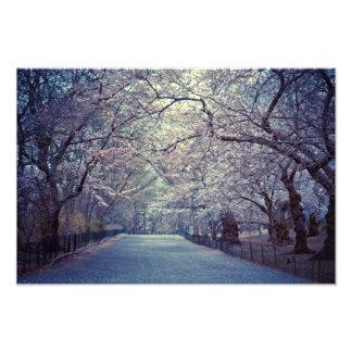 Central Park Cherry Blossom Path Art Photo