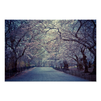 Central Park Cherry Blossom Path Poster