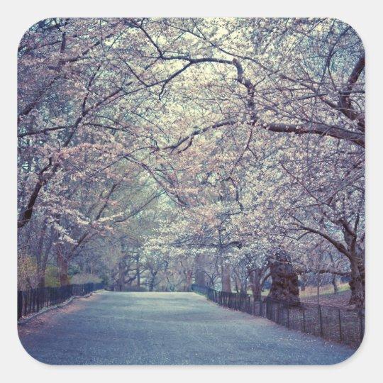 Central Park Cherry Blossom Path Square Sticker