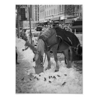 Central Park Horse Photo Print