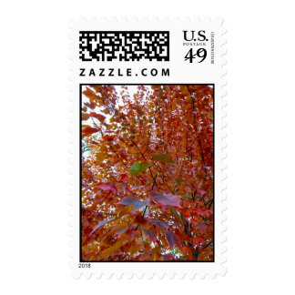 Central Park in Autumn Postage Stamps