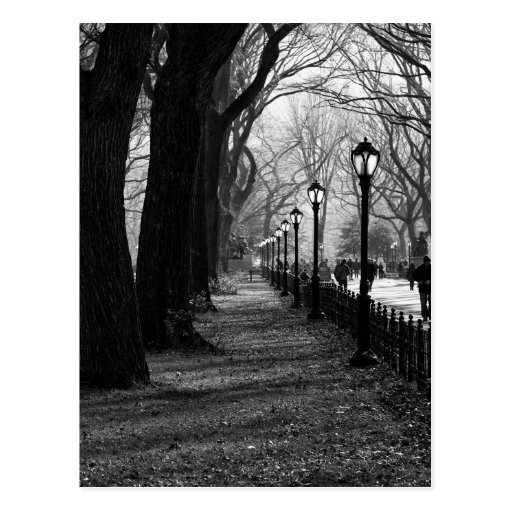 Central Park in New York City Post Card