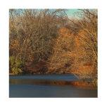 Central Park Landscape Photo Wood Canvas