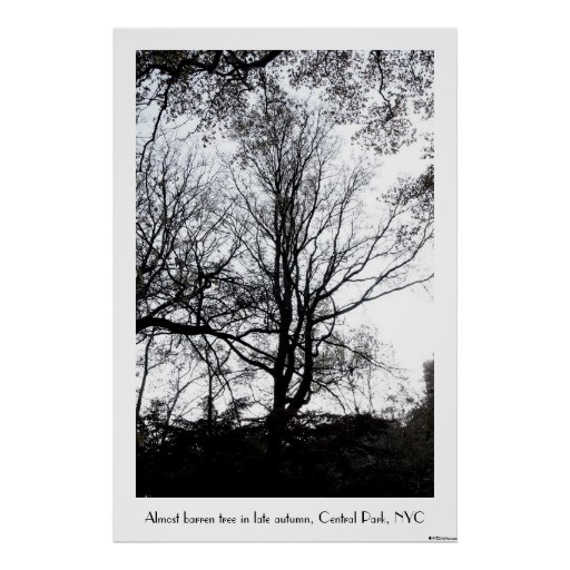 Central Park late autumn almost Barren Tree B&W Poster