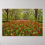 Central Park NYC de los tulipanes Impresiones