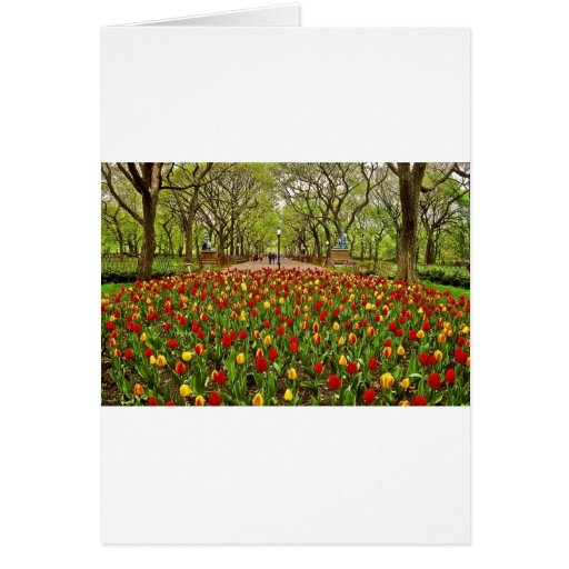 Central Park NYC de los tulipanes Tarjeta De Felicitación