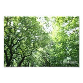 Central Park Photographic Print