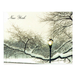 central park snowy tree postcard