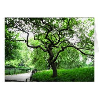 Central Park Tree Card