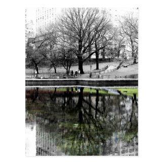 Central Park Tree Postcard