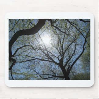Central Park trees, NYC.JPG Mouse Pad