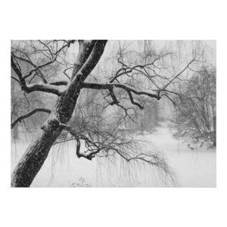 Central Park Winter Snow Landscape Photo Poster