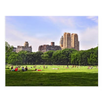 Central Park's Sheep Meadow Postcard