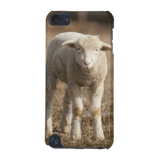 Central Pennsylvania, USA,Domestic sheep, Ovis iPod Touch (5th Generation) Case