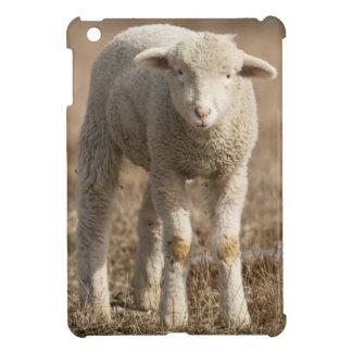 Central Pennsylvania, USA,Domestic sheep, Ovis Cover For The iPad Mini