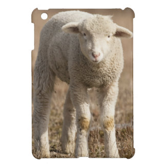 Central Pennsylvania, USA,Domestic sheep, Ovis iPad Mini Cover