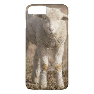Central Pennsylvania, USA,Domestic sheep, Ovis iPhone 8 Plus/7 Plus Case