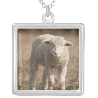 Central Pennsylvania, USA,Domestic sheep, Ovis Silver Plated Necklace
