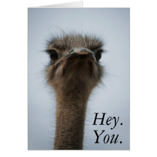 Central South Africa, African Ostrich, Close-up Card