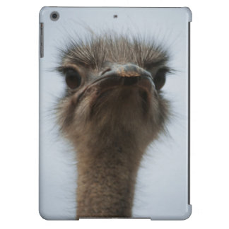 Central South Africa, African Ostrich, Close-up Cover For iPad Air