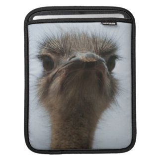 Central South Africa, African Ostrich, Close-up Sleeve For iPads