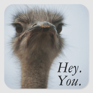 Central South Africa, African Ostrich, Close-up Square Sticker