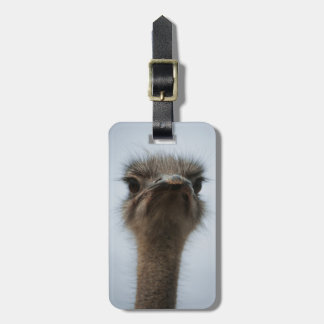 Central South Africa, African Ostrich, Close-up Tag For Luggage