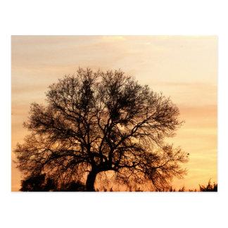 Central Texas Sunset Postcard
