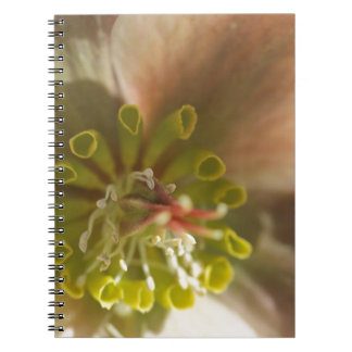 Centro abstracto de la flor libro de apuntes