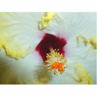 Centro amarillo del rojo del hibisco w escultura fotográfica