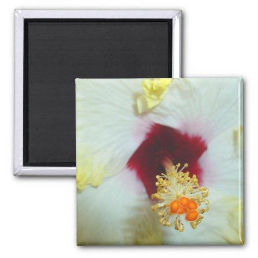 Centro amarillo del rojo del hibisco w imanes de nevera