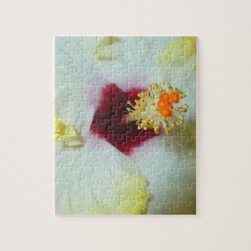 Centro amarillo del rojo del hibisco w puzzle