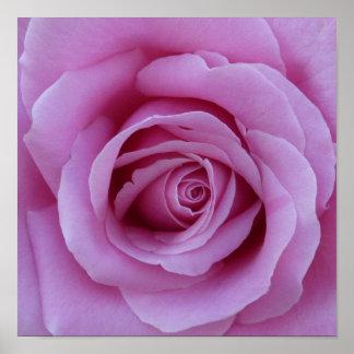 Centro color de rosa rosado posters