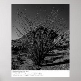 Centro de investigación profundo del desierto del póster