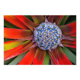 Centro de un agavo floreciente - San Francisco Cojinete