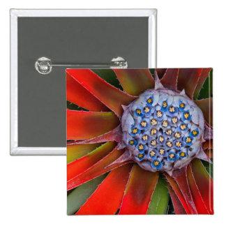 Centro de un agavo floreciente - San Francisco Pin Cuadrado