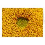 Centro de una flor del sol tarjetón