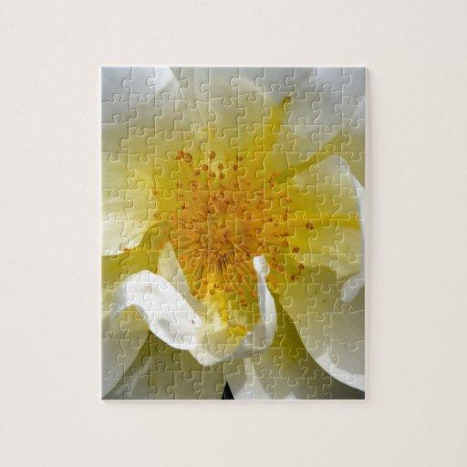 Centro del rosa blanco puzzle