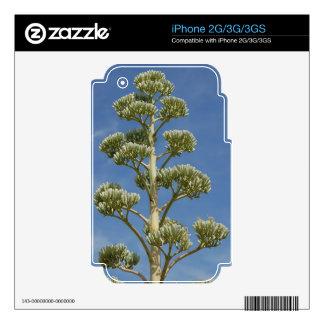 Century Plant iPhone 2G Skins