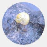 Cepaea in the rain sticker