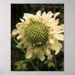 Cephalaria Floral Print